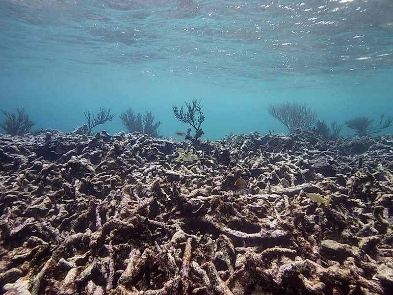Ocean acidification can cause the death of coral reefs, which are homes to some of the earth's greatest marine biodiveristy.