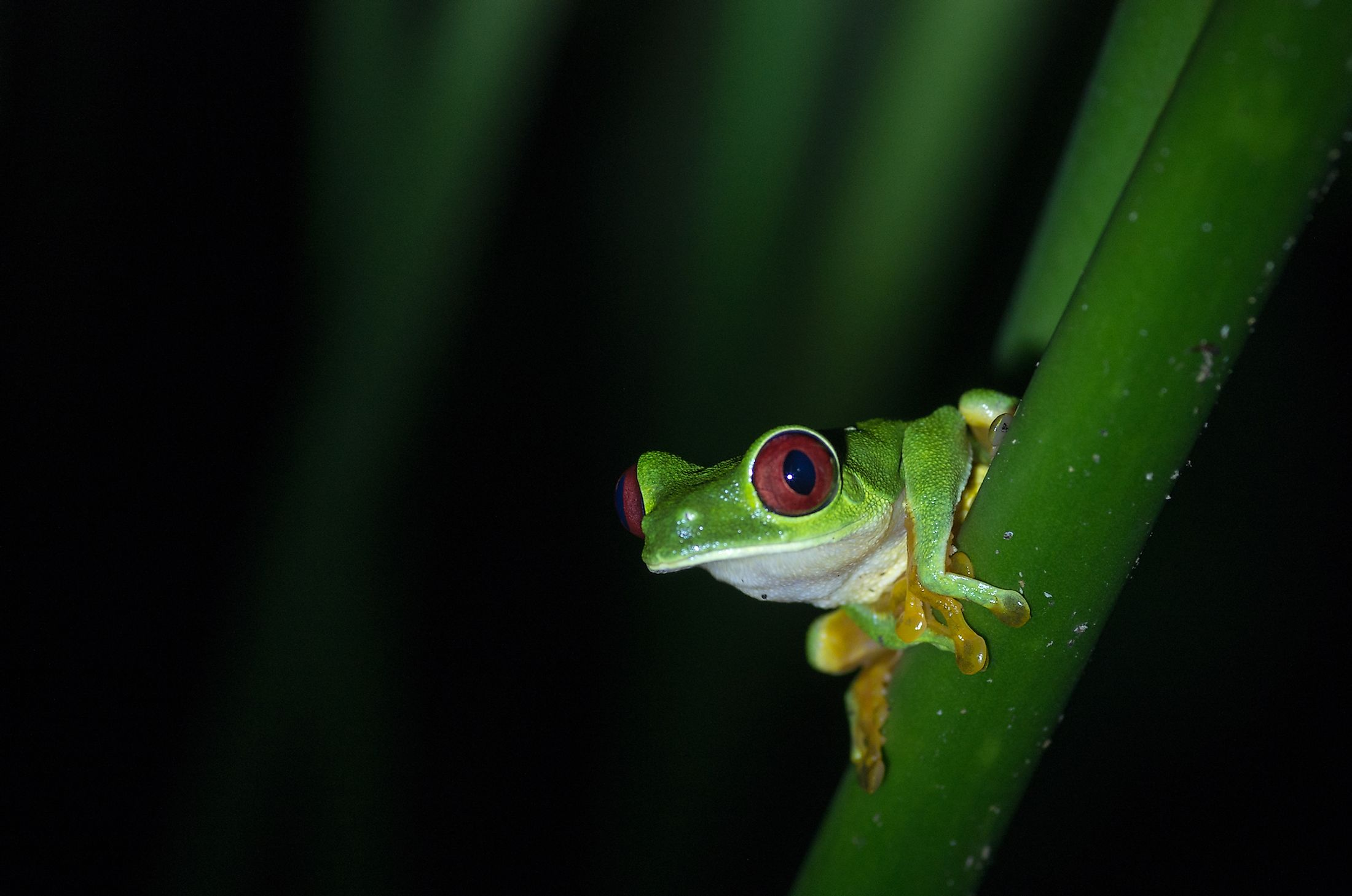 A tree frog. Image credit: Bartholo/Shutterstock.com