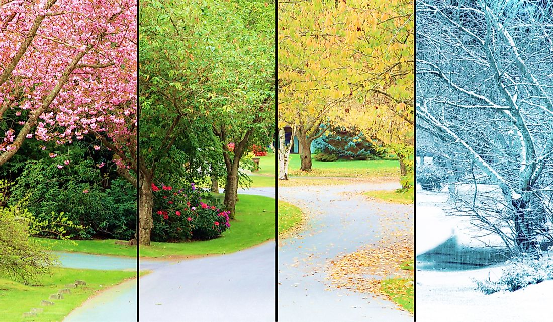 A tree lined road depicting the changes of the four seasons: spring, summer, fall, and winter.