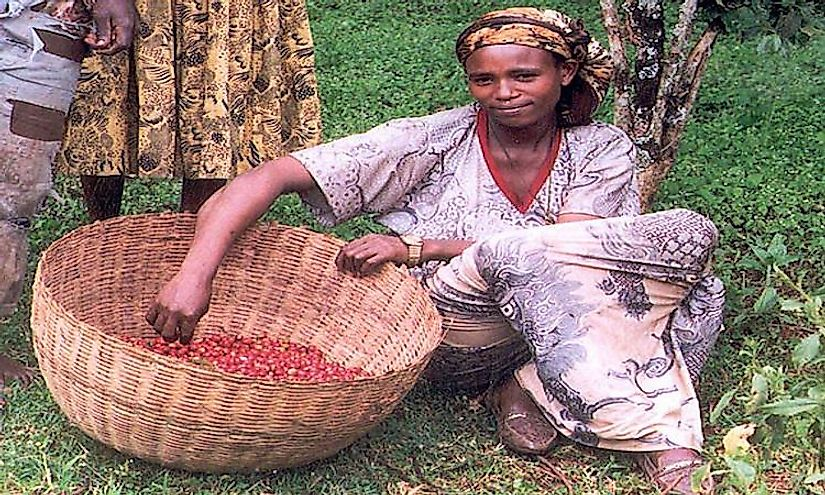 A female coffee farmer in Ethiopia, a country from where coffee originated.