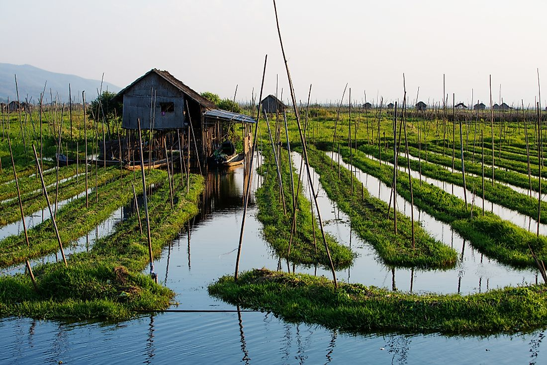 Floating gardens used for agriculture in Myanmar.