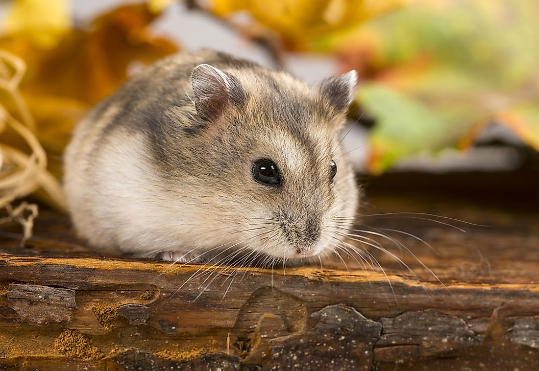 "A ""hamster"" is an example of an animal whose name begins with H."