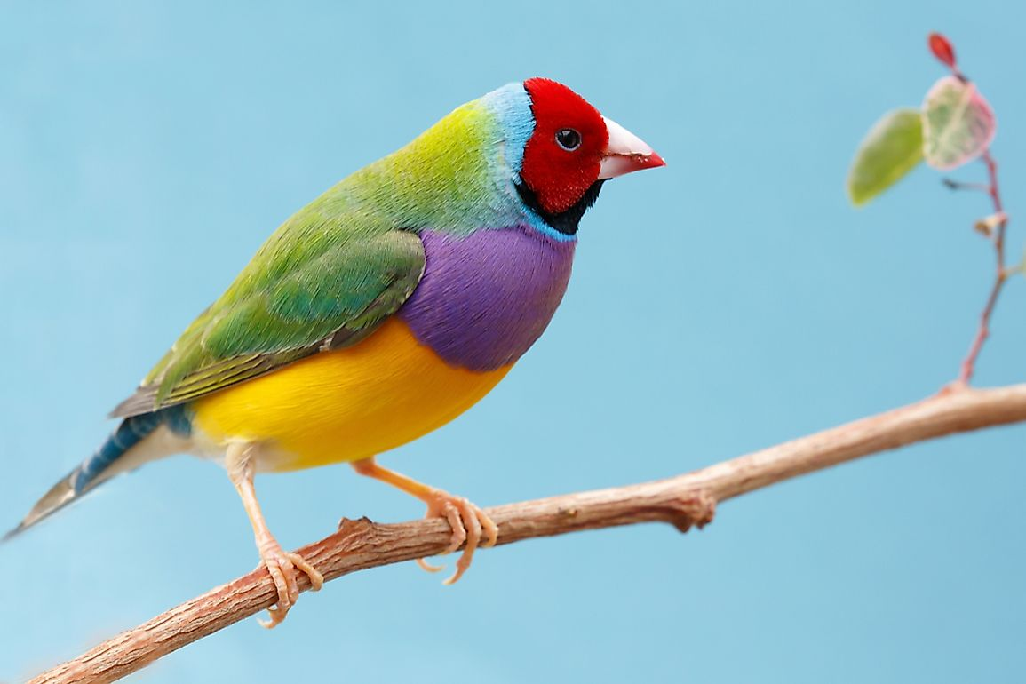 The Most Colorful Birds From Around The World Worldatlas