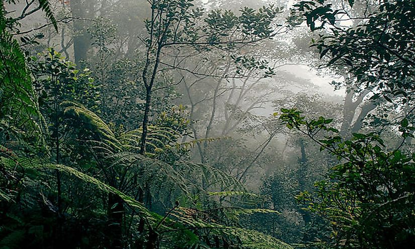 Rainforests are highly dense and impenetrable forests which support rare and unique species of plants and animals