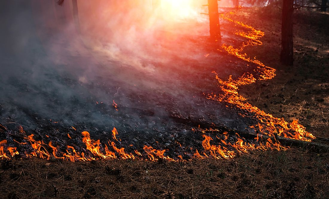 Wildfires can be caused by a variety of human or natural reasons.