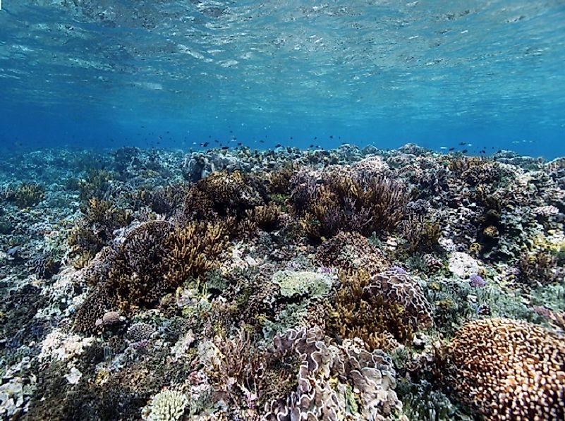 #2 Natural Habitats and Biodiversity -