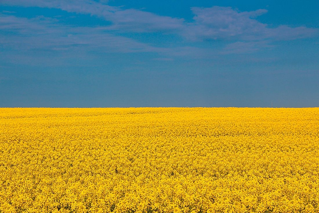 Ukrainian crops that mimic the appearance of the flag of Ukraine.