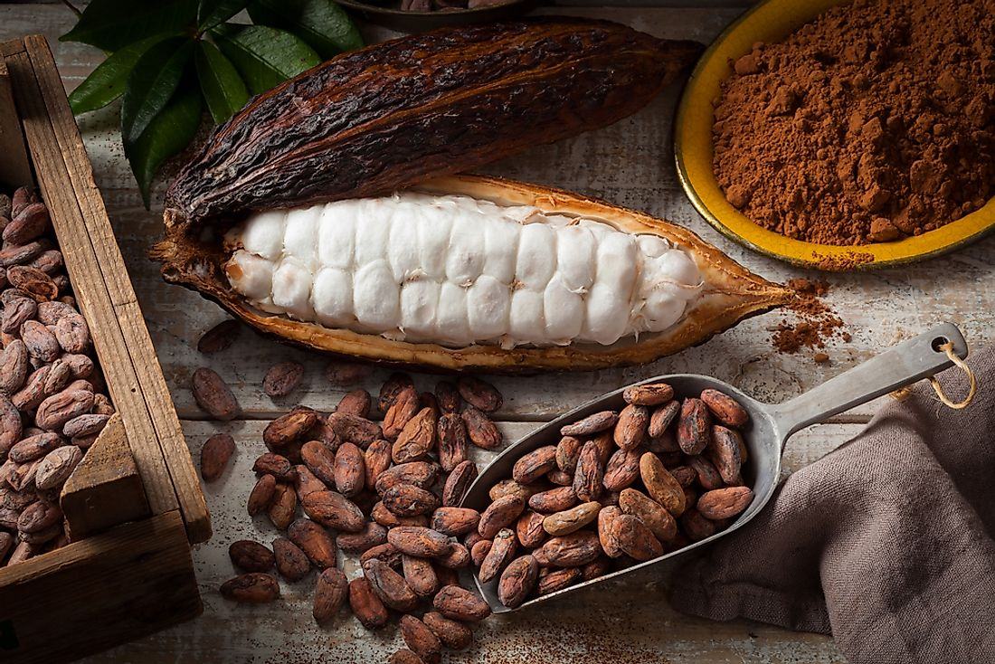 Cocoa beans come from the Theobroma cacao tree.