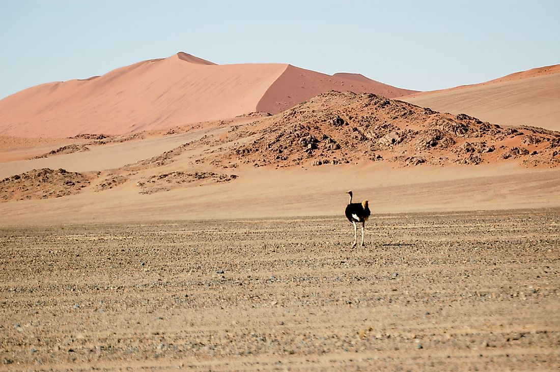 What is the Oldest Desert in