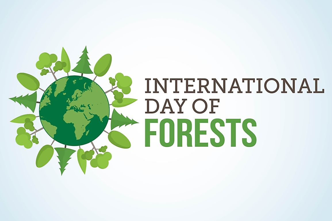 The International Day of Forests raises awareness on the importance and use of trees and celebrates how trees support human life.