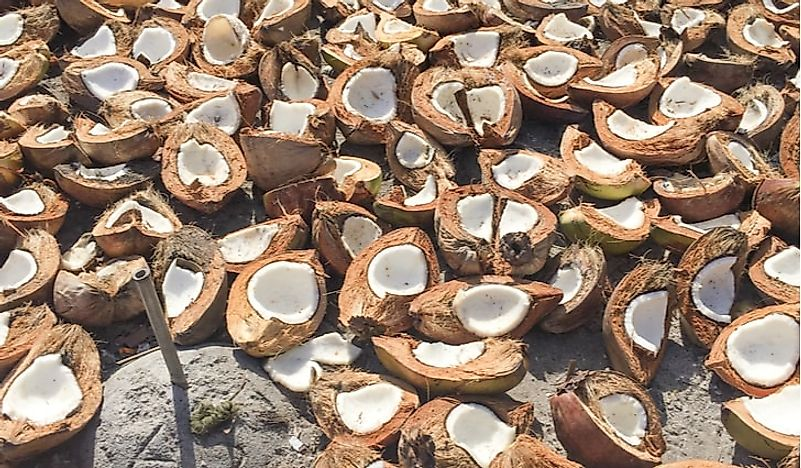 Coconuts are left out in the sun to dry as part of the copra process.