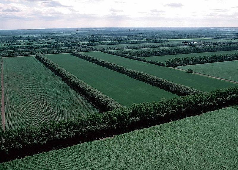Rows of trees can help prevent erosion in agricultural fields.