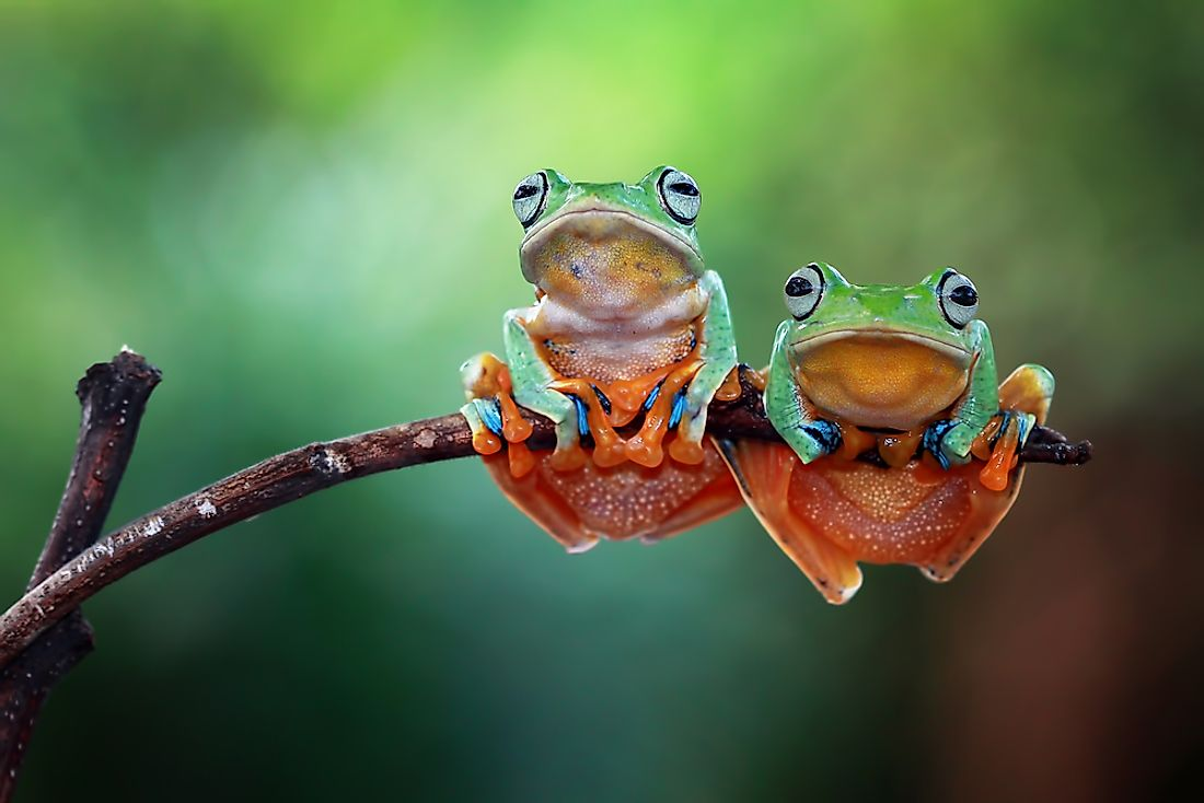 Over 90% of frogs are amphibians.