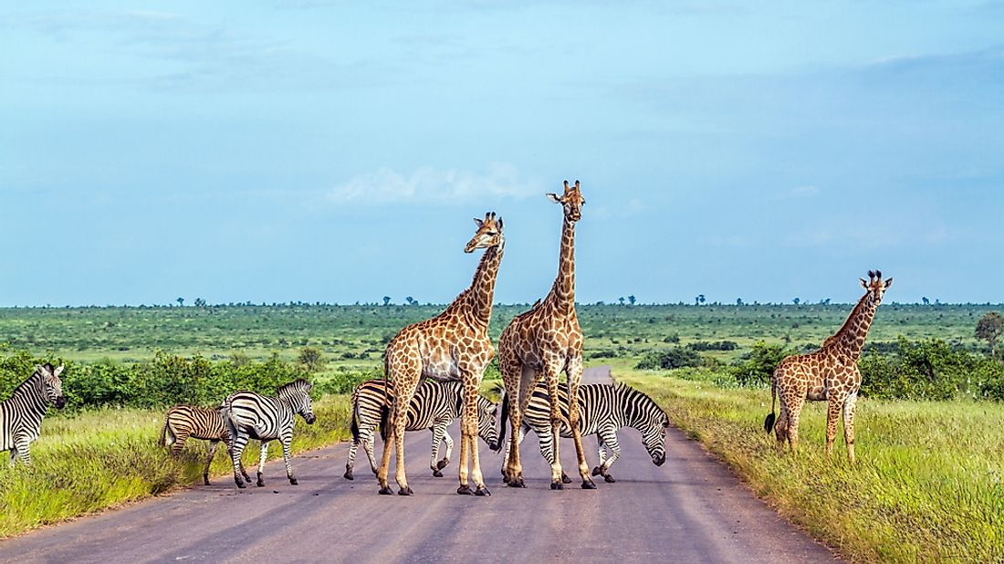 Animals in Kruger National Park, South Africa.