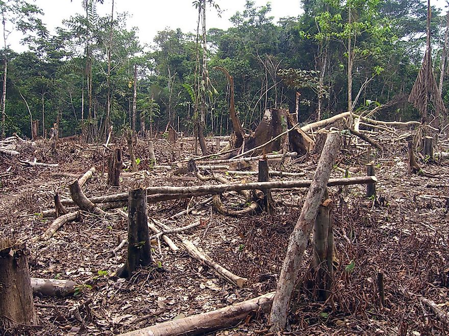 Slash and burn agriculture is degrading the Amazonian forests at a fast pace.