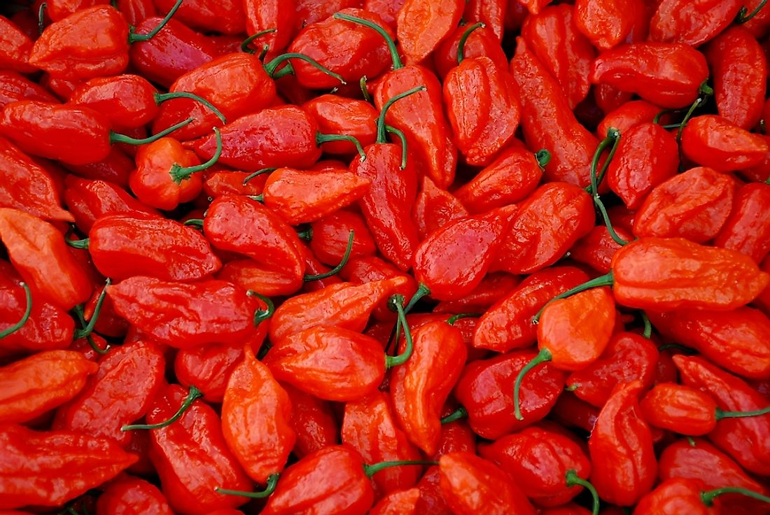 Ghost peppers are among the world's hottest peppers.