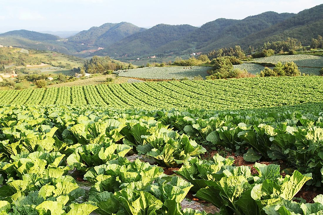 Organic farms cover approximately 1.9 million hectares of land in China.