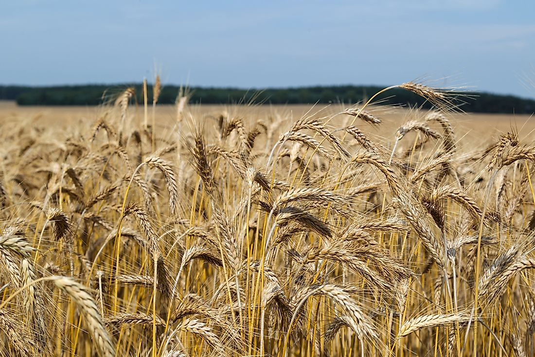 top triticale producing countries in the world worldatlas com