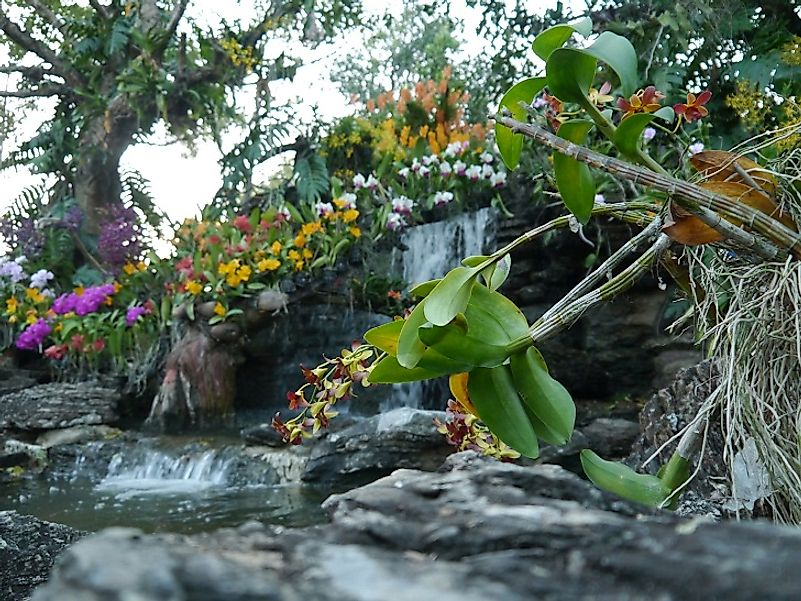 Orchids and waterfall within the Singapore Botanic Gardens.