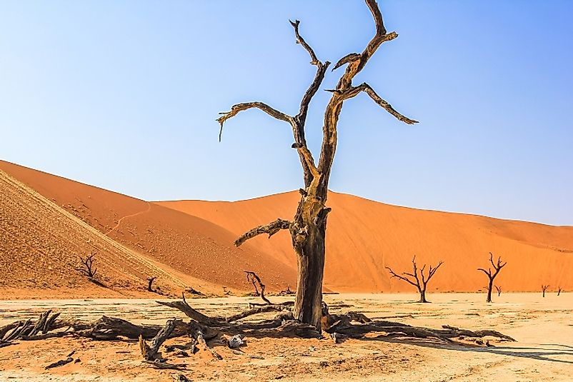 A dead tree suspended in time, preserved by the environmental conditions of the Deadvlei clay pan for centuries.