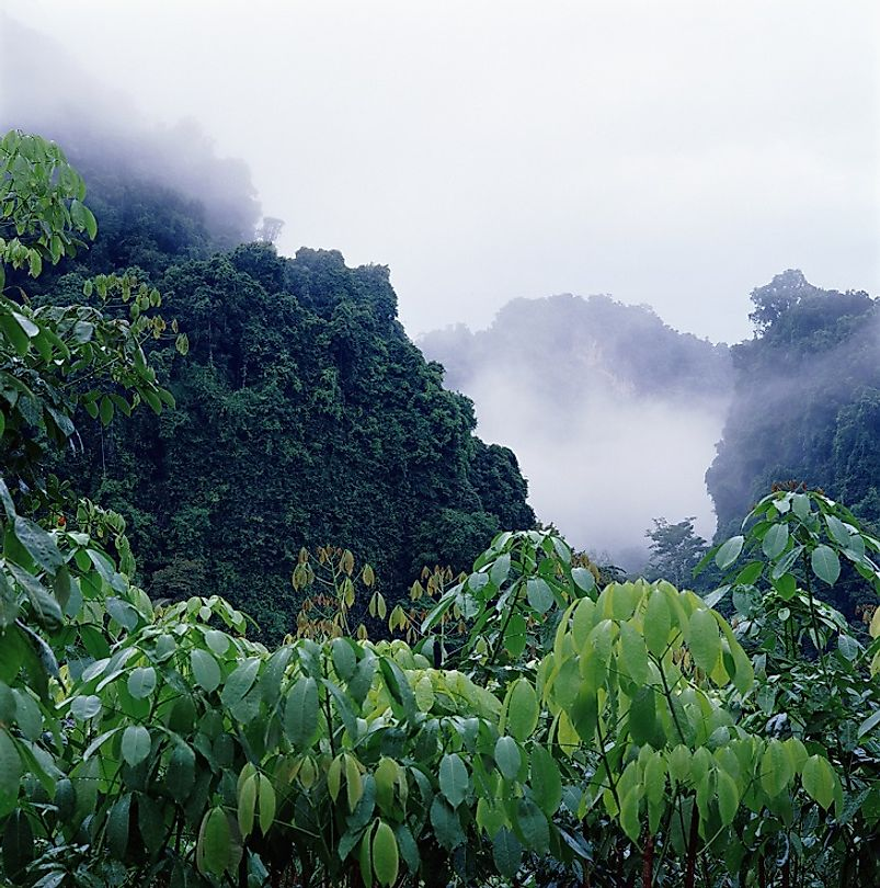 What Is A Rainforest, And Where Are They Found? - WorldAtlas.com