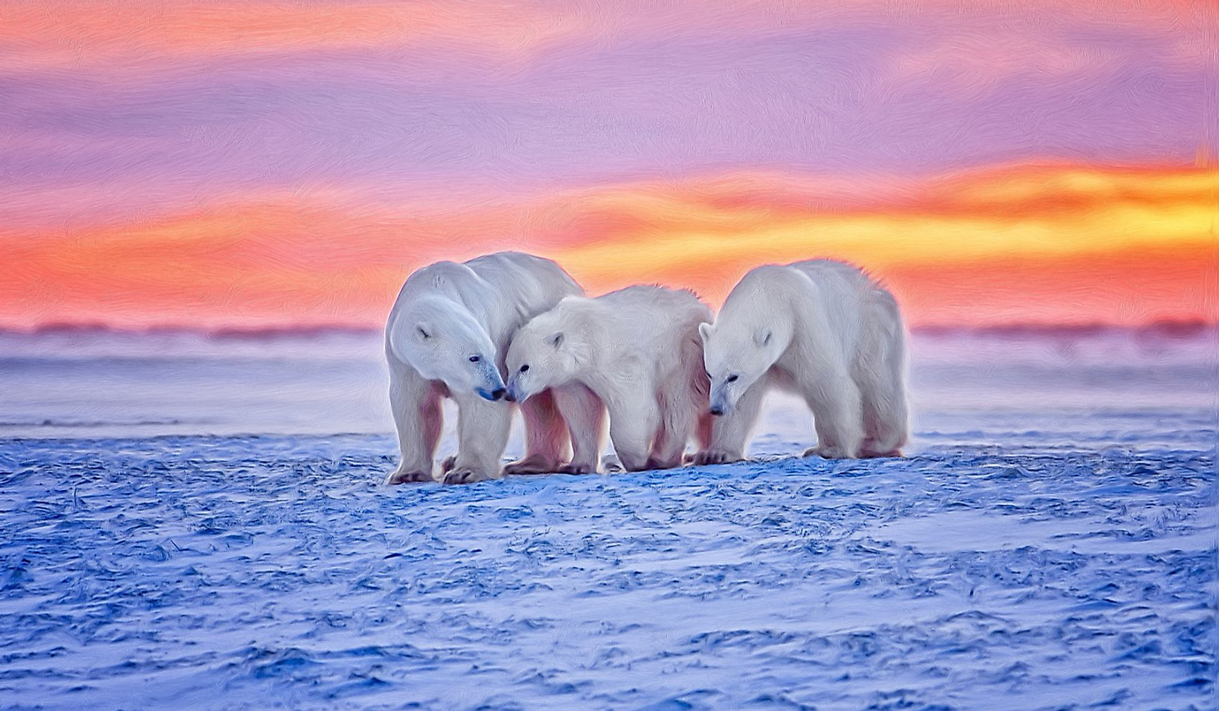 Polar bear family in the Arctic sunset.