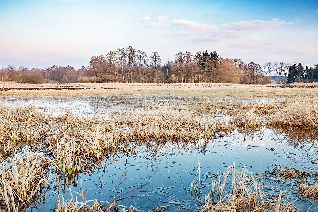 Unlike marshes and swamps, wet meadows only contain standing water during some parts of the year.