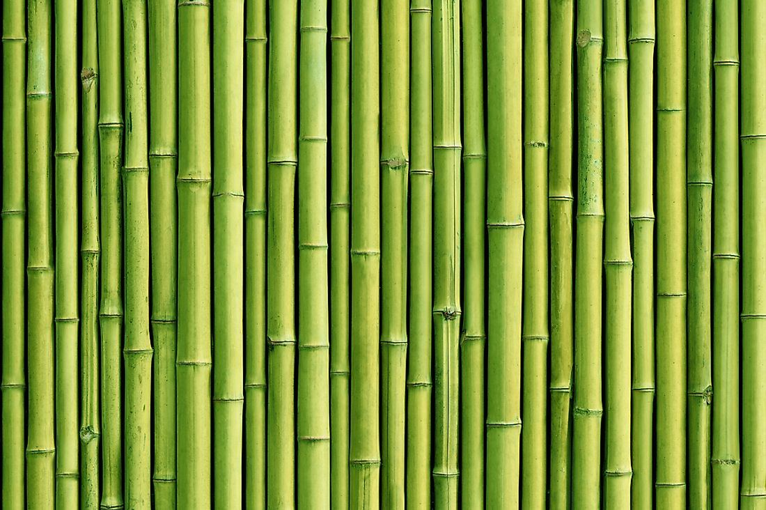 Bamboo has a number of uses.