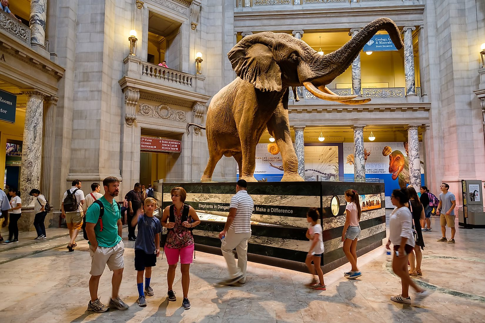 Visitors at the Main Hall of the National Museum of Natural History in Washington D.C. Image credit: Kamira/Shutterstock.com