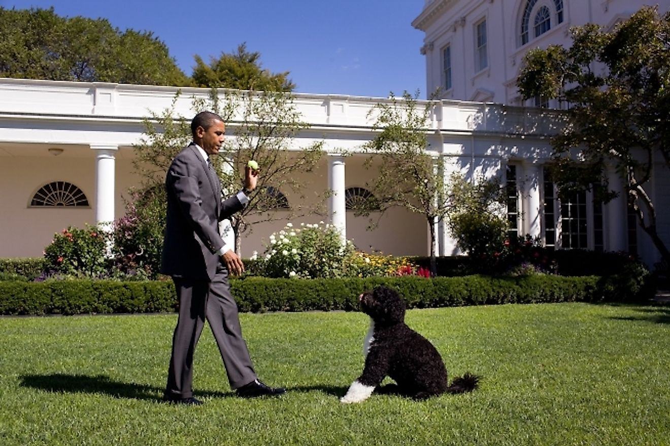 "Bo, the Obama family dog, waits for President Barack Obama to throw the ball during a game of ""fetch"" in the Rose Garden of the White House, Sept. 9, 2010. Image credit: Official White House Photo by Pete Souza"