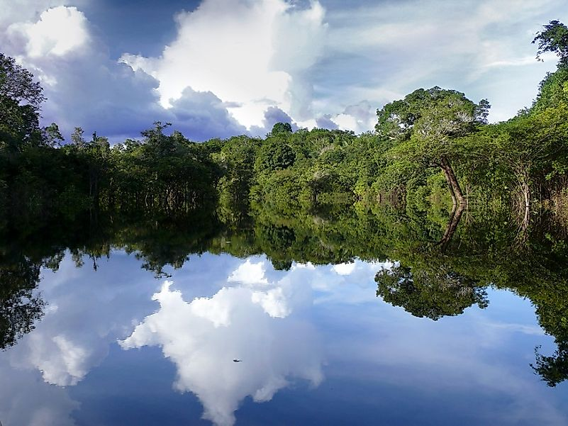 A calm stretch of the Amazon flowing through the lush greenery of a Brazilian rainforest.