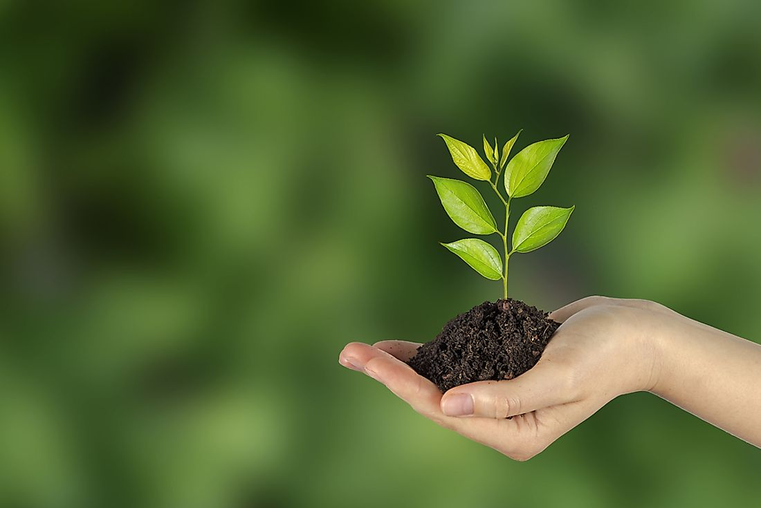 Planting a tree is an example of a carbon offset.