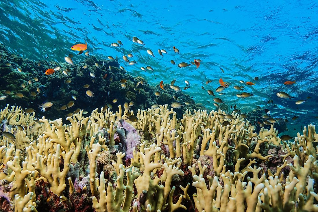 Coral reefs in the Red Sea in Egypt.