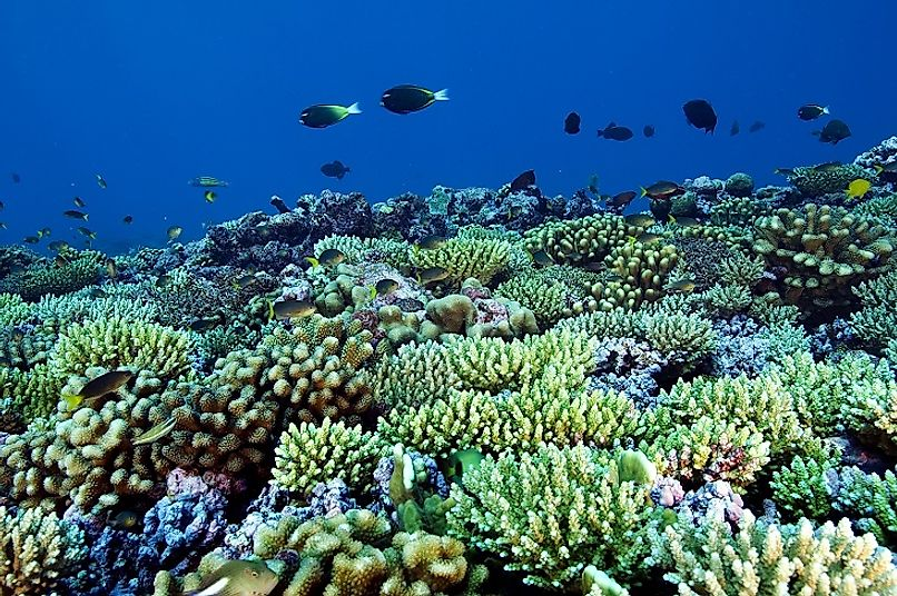 Coral reef ecosystems in the Phoenix Islands Protected Area.