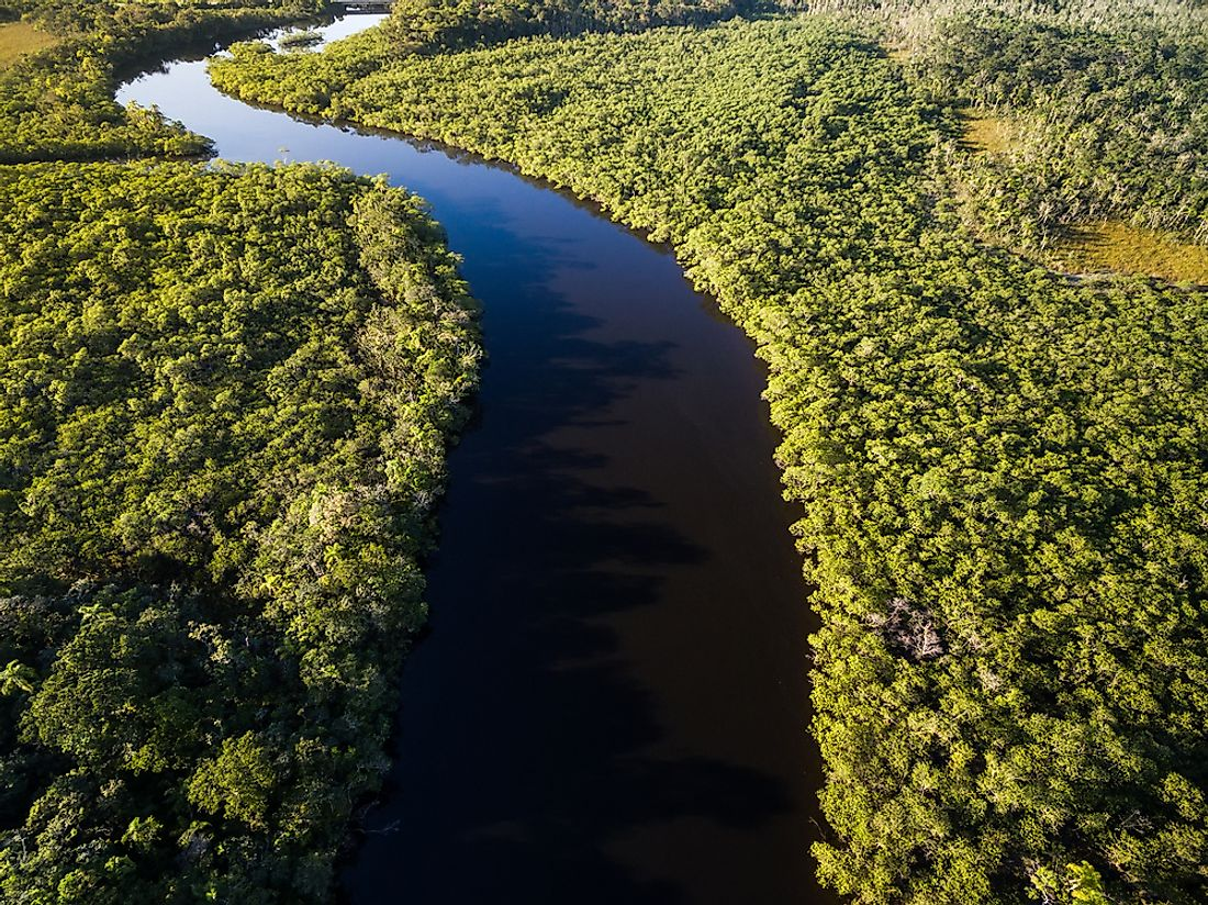A view of the Amazon Rainforest in Brazil.