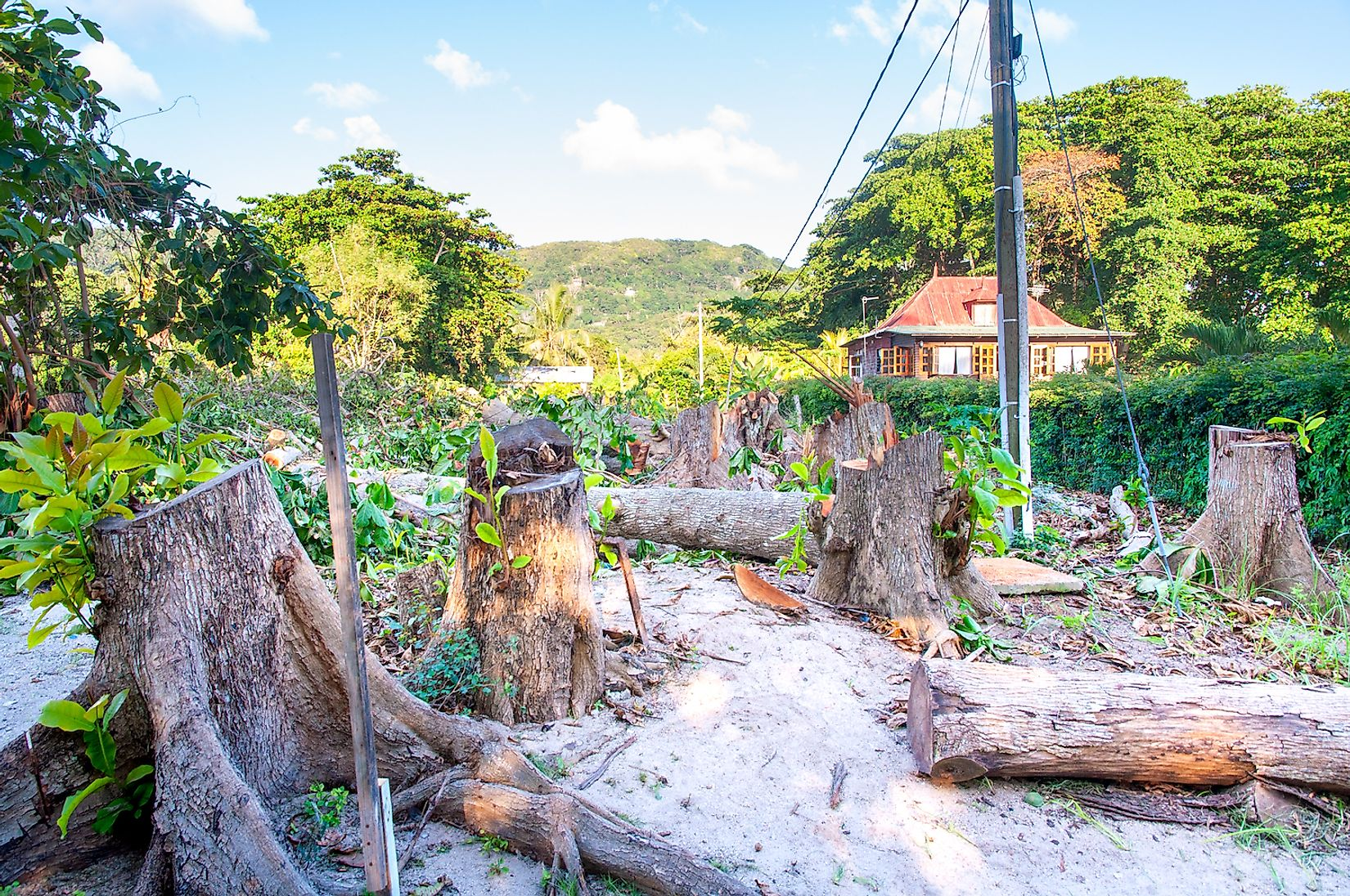 Forest trees cut down for new construction work. Image credit: Massimiliano Finzi/Shutterstock.com