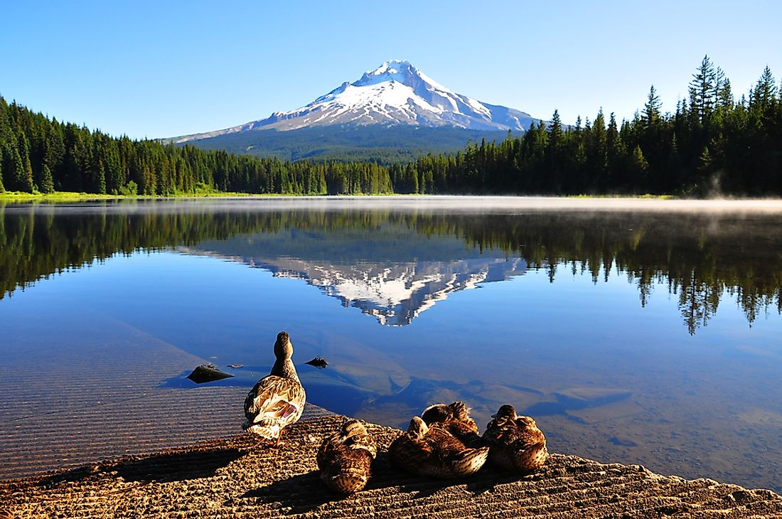 Mount Hood, the tallest mountain found in Oregon.