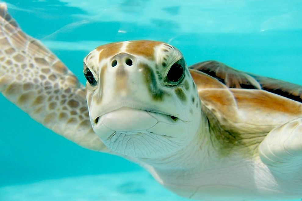 A sea turtle swimming in the sea.