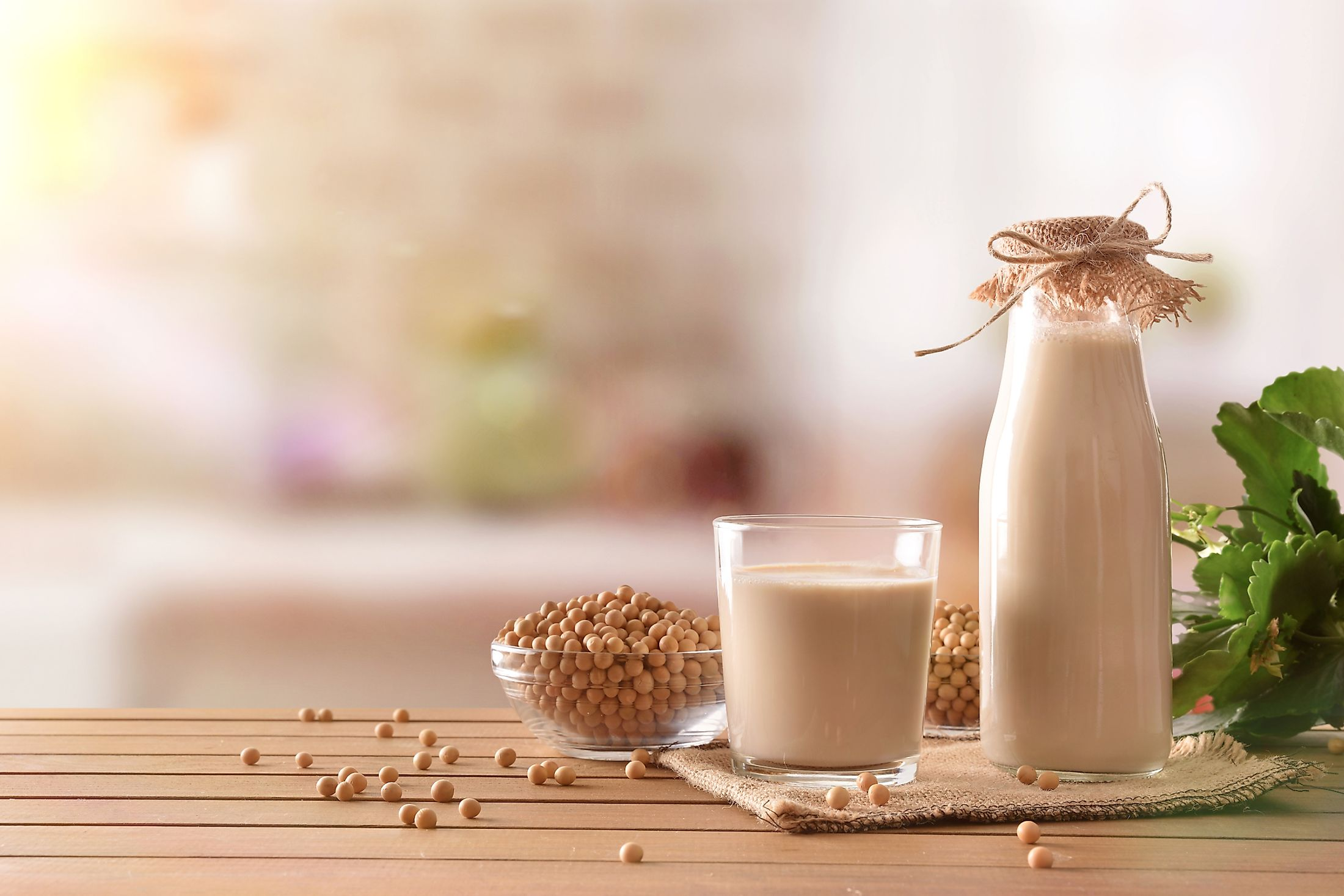 Soy milk and grains on a wooden table