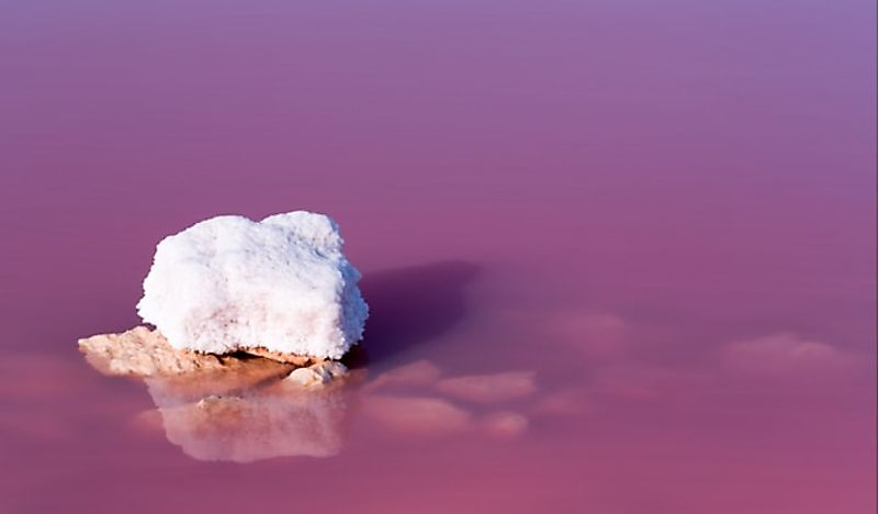 A close-up of the bright pink water of Las Salinas de Torrevieja in Torrevieja, Spain.