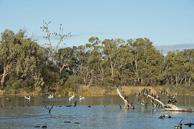Avian fauna abounds in this stretch of the Darling River.