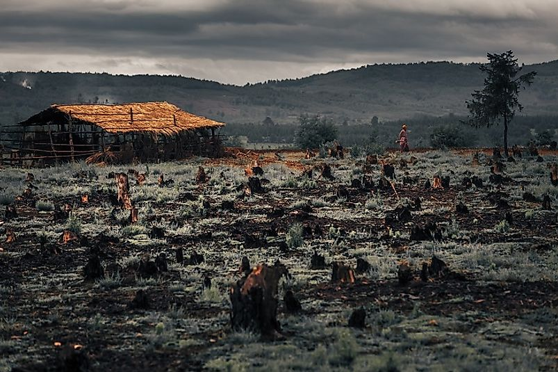 Charred remnants of forest, removed to make way for farming in Madagascar.