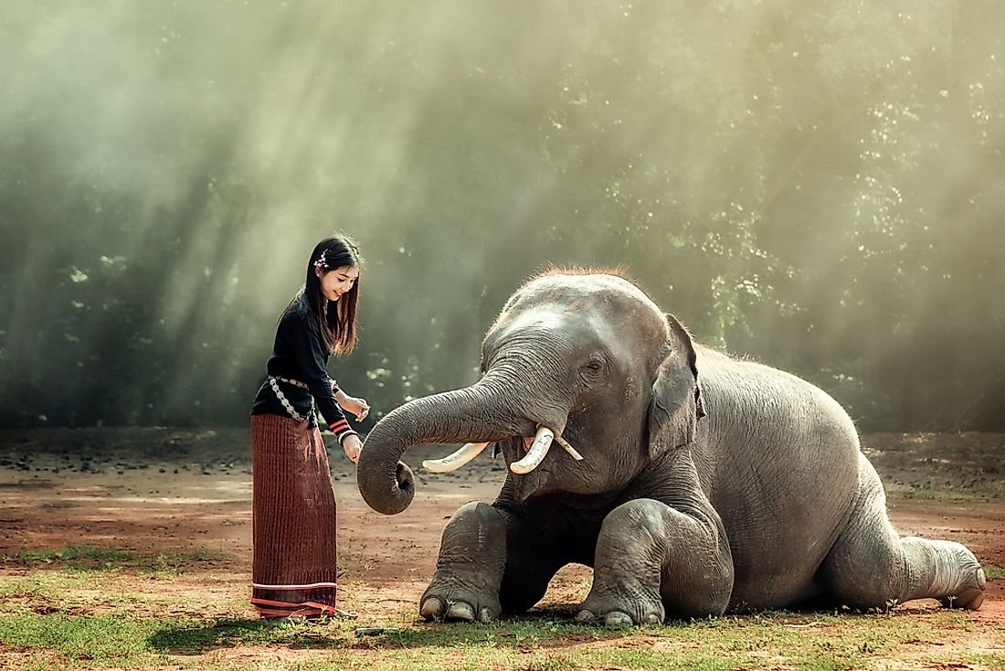 Elephants are culturally important in modern and ancient Thai society.