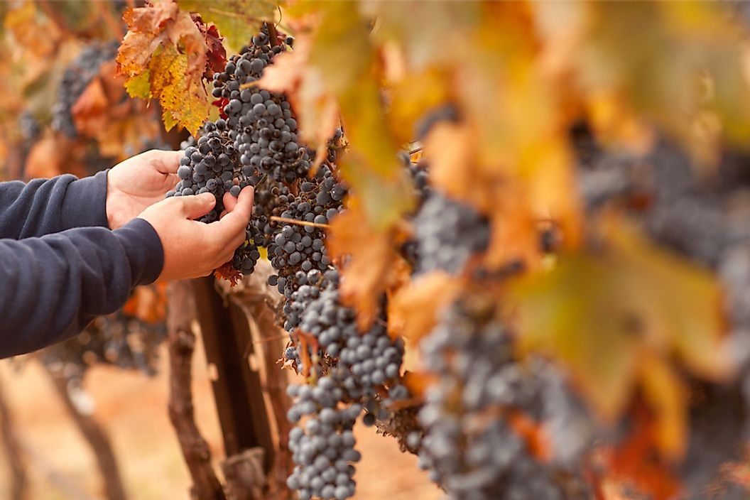 Italy has a large agricultural industry and is the world's biggest producer of wine.