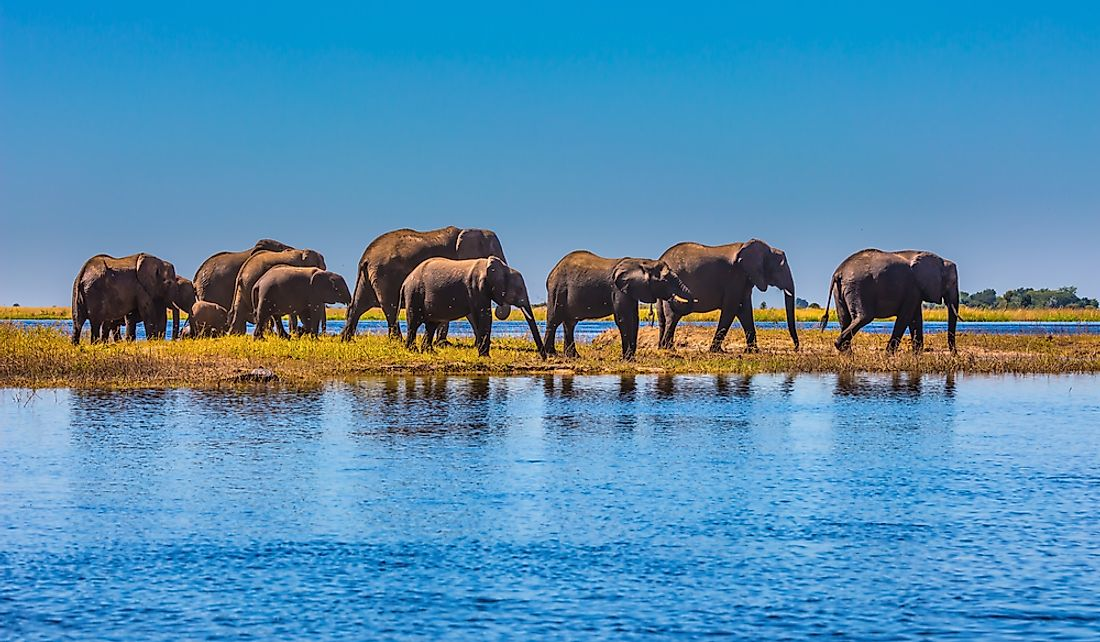 Elephants in Chobe National Park in the Okavango Delta.
