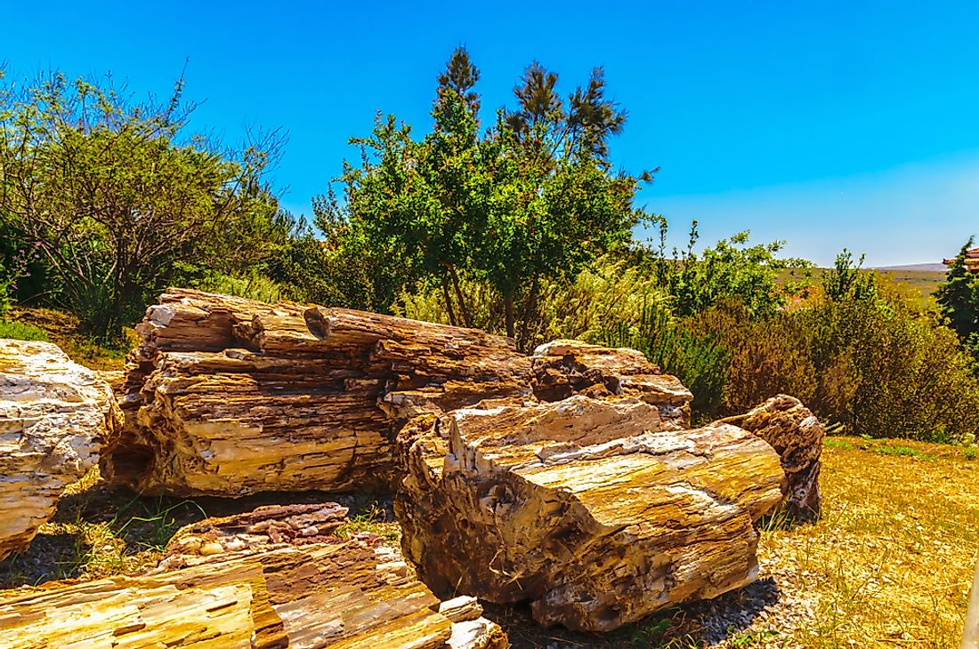 The Petrified Forest was designated as a UNESCO's Global Geopark in 2014.