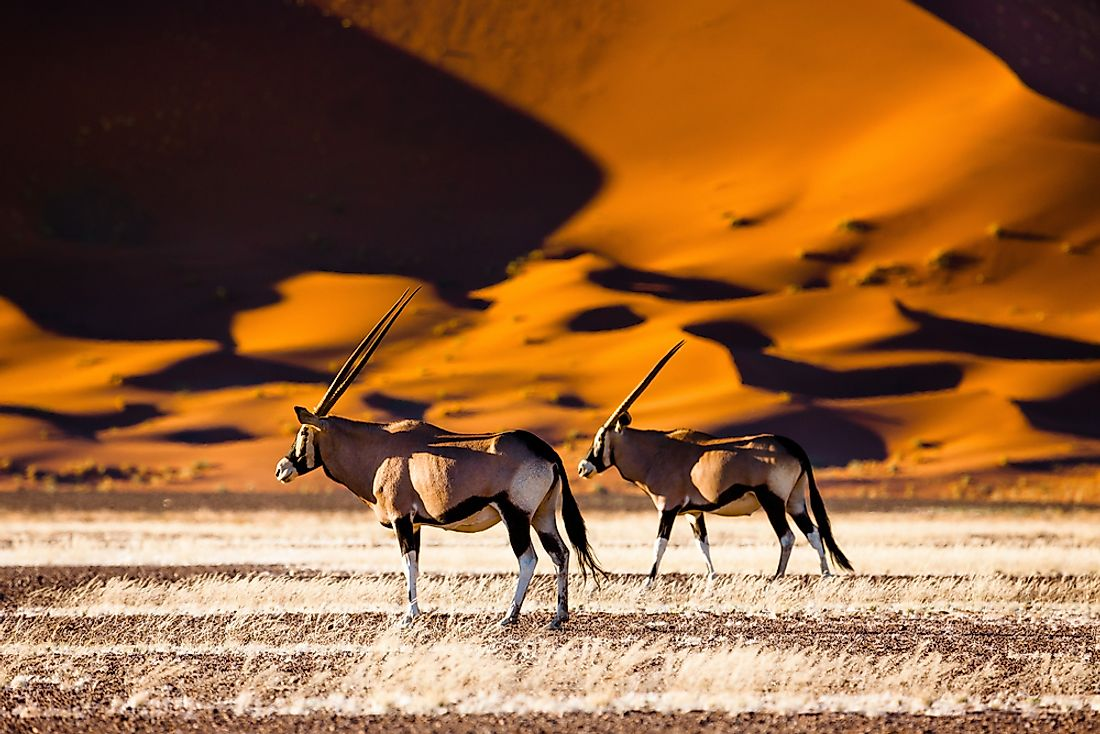 Oryx and dunes, Namibia.