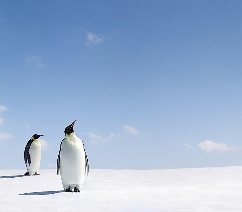 #6 Penguin