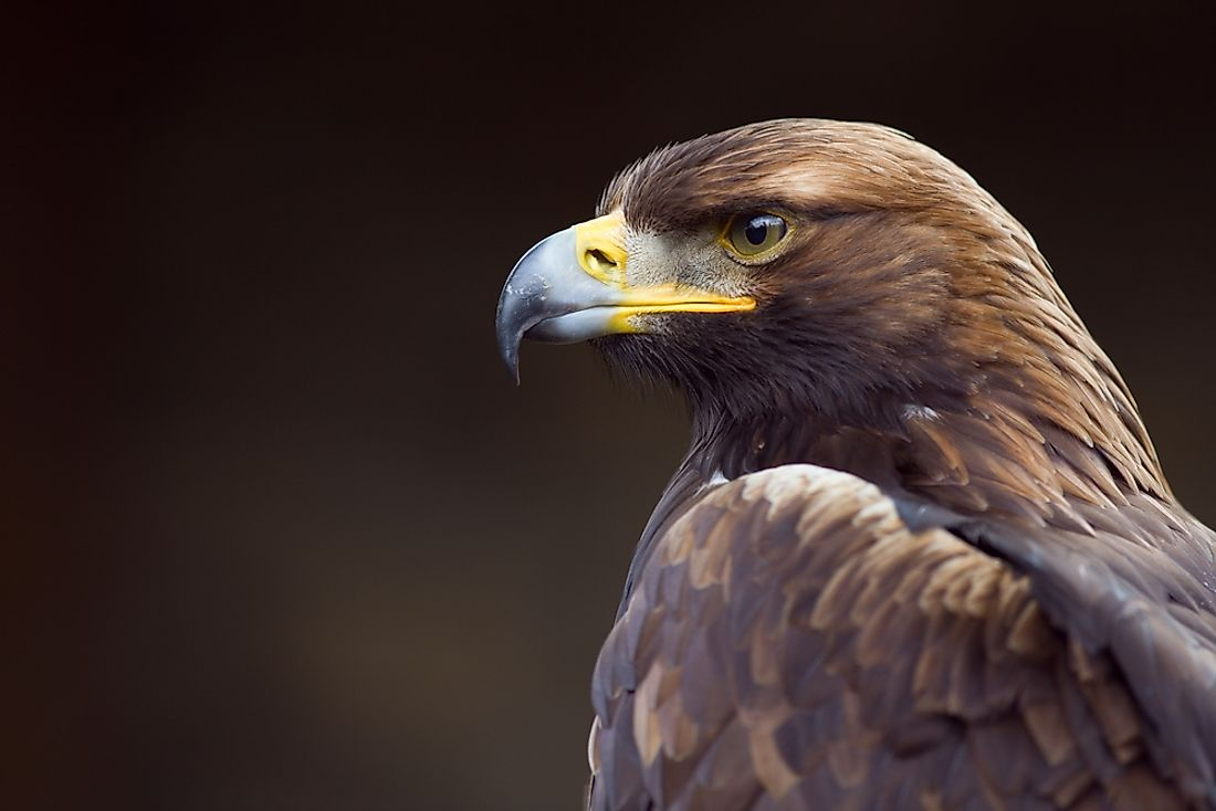 The national bird of Germany is the golden eagle.