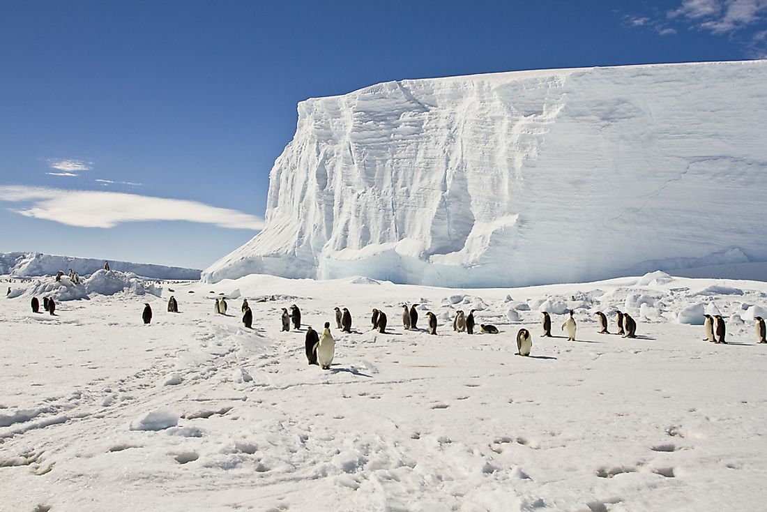 Penguins inhabit the icy landscape of Antarctica.